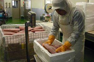 冷凍魚出荷3